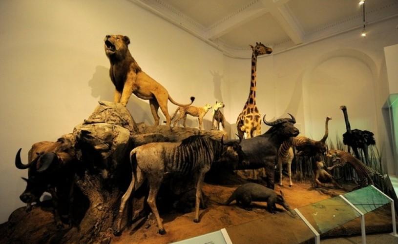 Seminar Naţional de Educatie Muzeala, la Muzeul Antipa