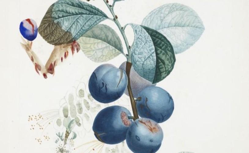 GALERIE FOTO Acuarele botanice rare, de Salvador Dali, vândute la licitaţie cu peste 1 milion de dolari