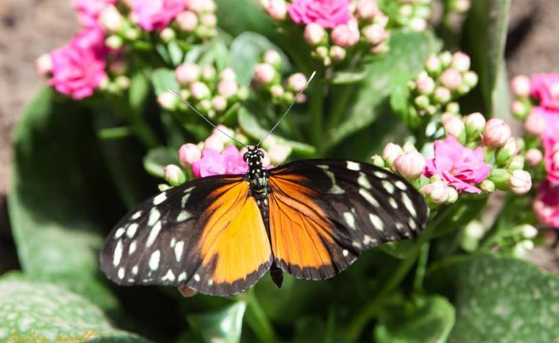 Expoziţia de fluturi tropicali vii de la Muzeul Antipa se prelungeşte până pe 18 august
