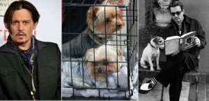 Johnny Depp riscă 10 ani de închisoare