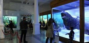 Muzeul 'Grigore Antipa' a demarat proiectul