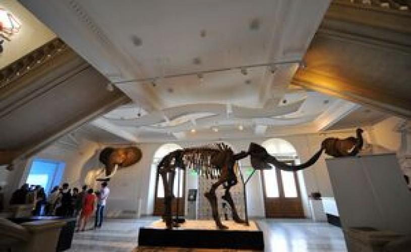 """Muzeul """"Grigore Antipa"""" va fi închis de luni până joi"""