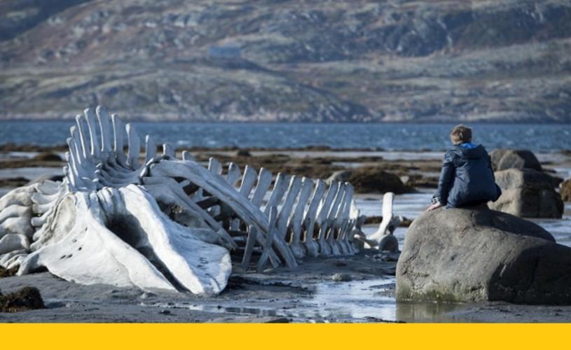 Leviathan deschide Les Films de Cannes à Bucarest