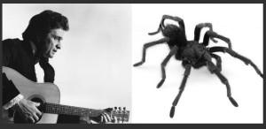 Un păianjen îi va purta numele lui Johnny Cash