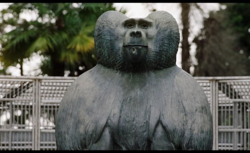 Ouăle lui Tarzan, în premieră mondială la TIFF