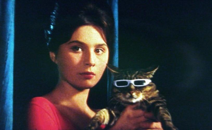 Mokol – pisica ochelaristă