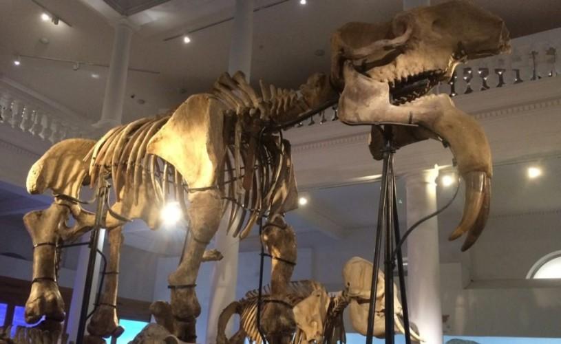 """Muzeul """"Antipa"""", program special de vizitare în perioada 14 – 17 august"""