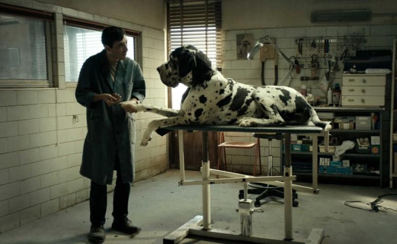 """""""Dogman"""", triplu-laureat la Premiile Academiei Europene de Film,în cinematografe din 25 ianuarie"""