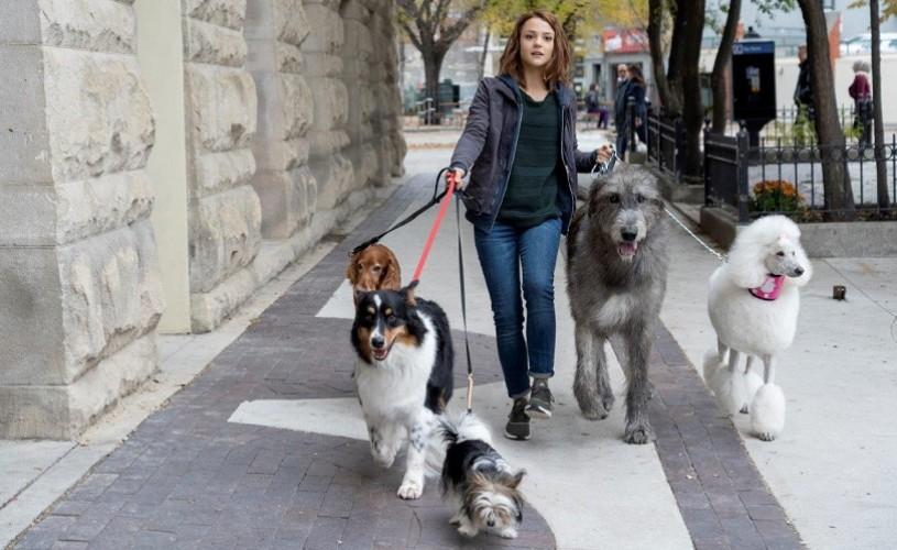 """,,Câinele, adevaratul meu prieten 2"""", în cinematografe"""