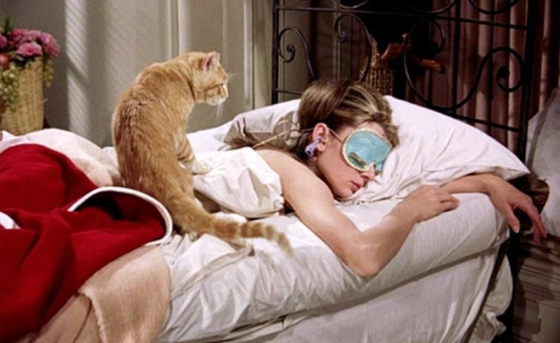 Undeva, cândva… Audrey, Orangey (mâța de Oscar), International Cat Day (🐱) si un studiu despre (bineînțeles) pisici