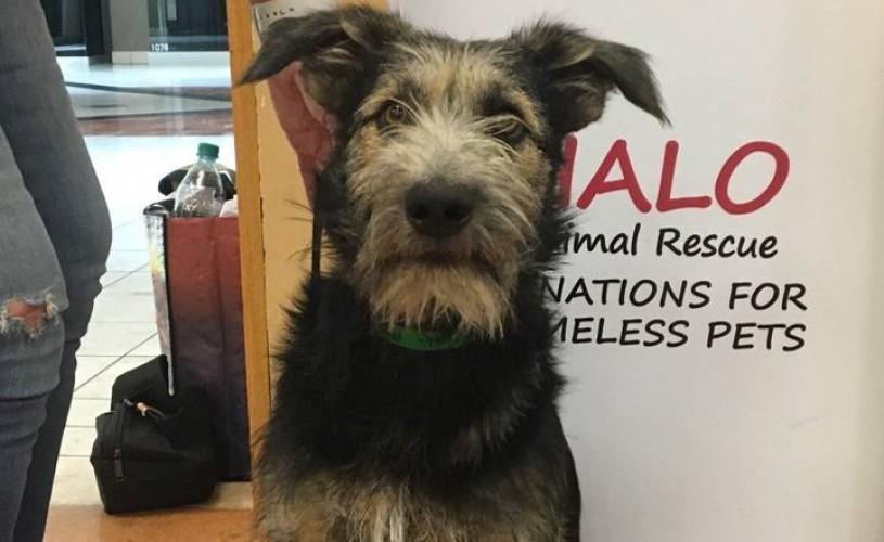 """Un câine dintr-un adăpost din Arizona, star în filmul live-action """"Lady and the Tramp"""""""