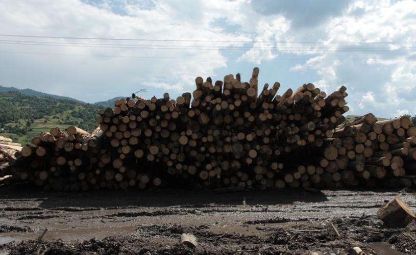 """""""Lemn""""/""""Wood"""", filmul care vorbește despre tăierile ilegale de păduri din România, va avea premiera la Copenhaga"""